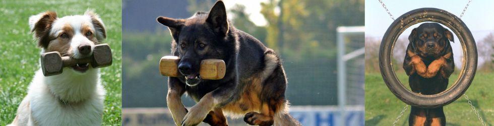 Hunde (© by ÖKV)
